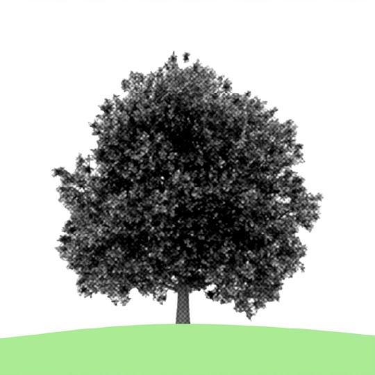piva-post-crescita-03